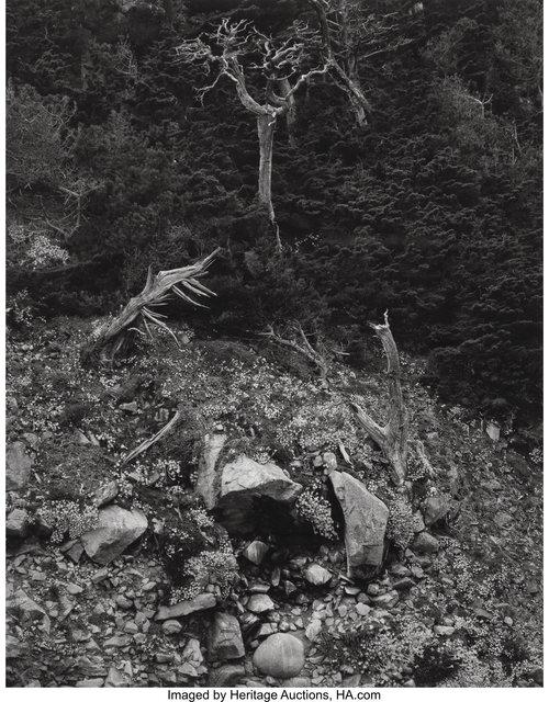 Edward Weston, 'Point Lobos', 1946, Heritage Auctions