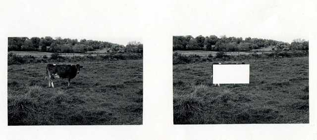 Jan Groover, 'Cow Alone in a Empty Field ', 1972, Photography, Gelatin silver print, Janet Borden, Inc.