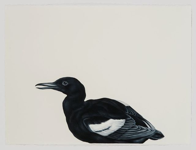 , 'Black Guillemot (after Blackburn),' 2016, Sears-Peyton Gallery