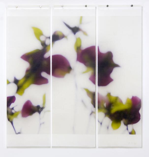 Jeri Eisenberg, 'Dark Magnolia', 2016, Photography, Archival ink on kozo paper infused with encaustic medium, Kathryn Markel Fine Arts