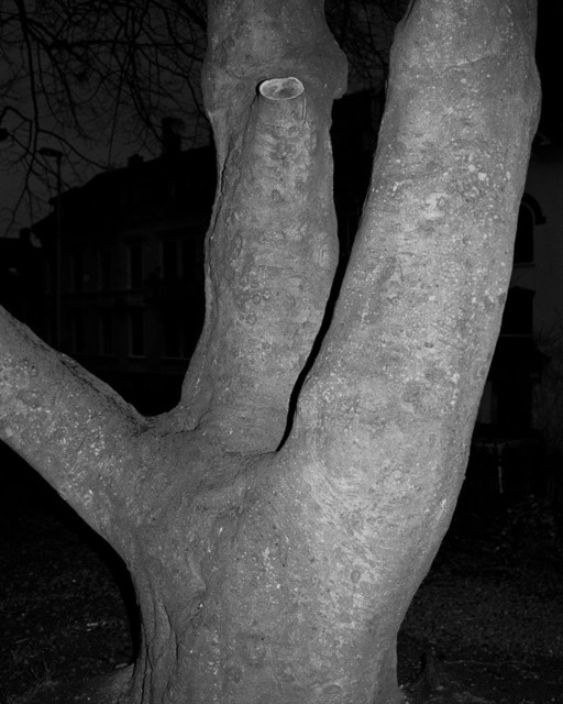 , 'Bergen Claw Tree,' 2012, Andréhn-Schiptjenko