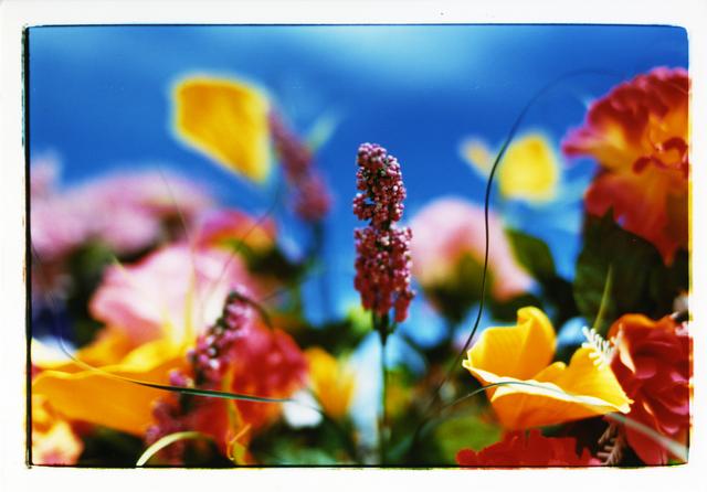, 'MN-ef-05-01-B4-3 Everlasting Flowers,' 2005, Aki Gallery