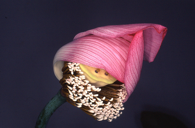 , 'Flower Rondeau,' 1997-2019, Michael Hoppen Gallery