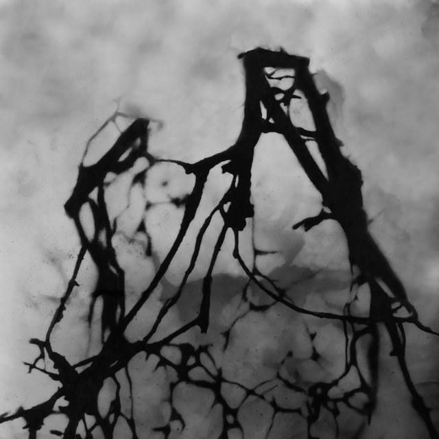 , 'Deep in the Woods 5,' 2017, Garvey | Simon