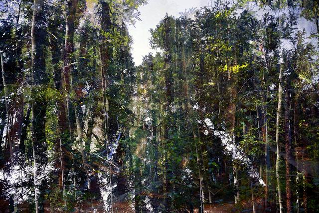 Lincoln Schatz, 'Forest Walk 3', 2014, Hexton Gallery