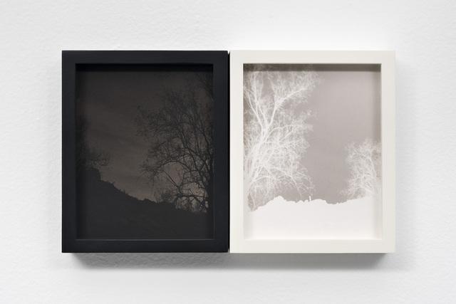 , 'Ironwood Tree on Volcanic Soil,' 2018, EUQINOM Gallery