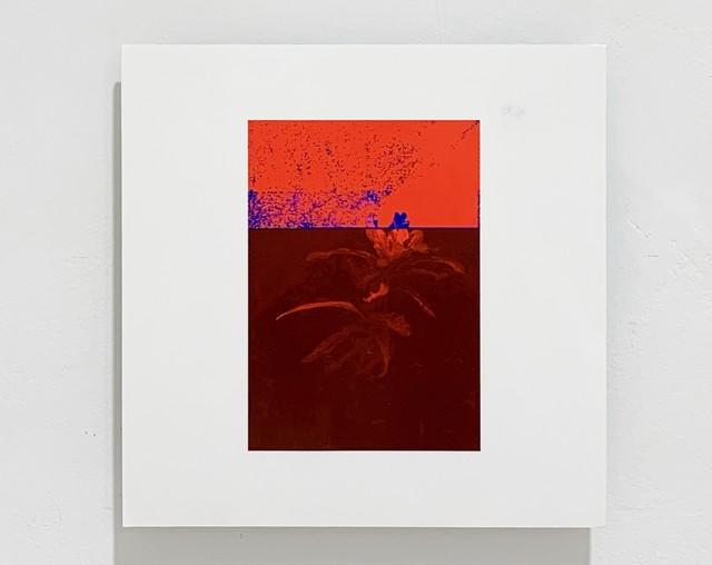 Federico García Trujillo, 'Almost-Decorative Red', 2019, Lucia Mendoza