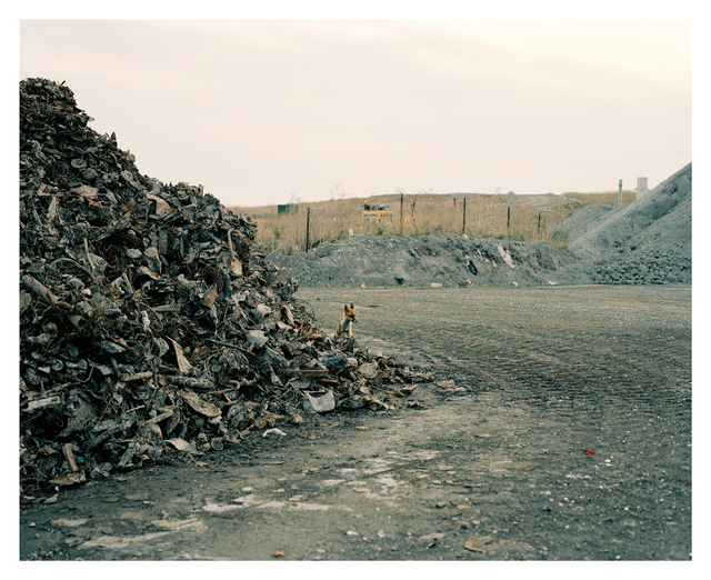 , 'Fox by Pile of Tin,' 2006, Francesca Maffeo Gallery