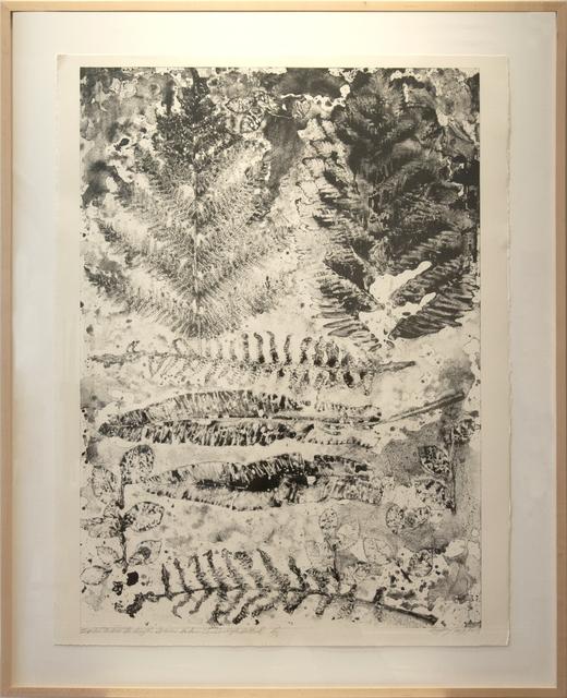 , 'Ferns from Royal Botanic Gardens (Edinburgh, Scotland),' , Main Street Arts