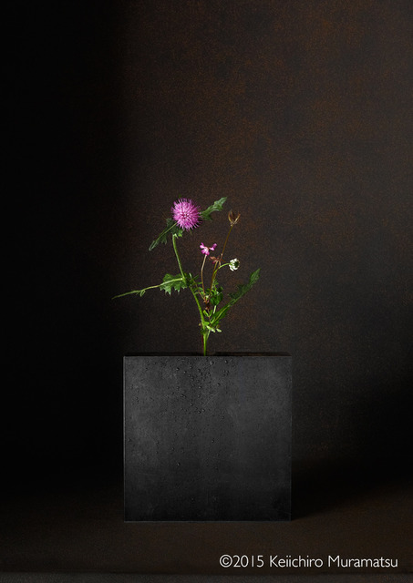 , 'A Stage Thistle 3-2,' 2015, Galerie Marie-Robin
