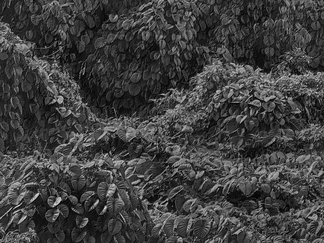 Jon Wyatt, 'Fault Line XVI', 2015, Circuit Gallery
