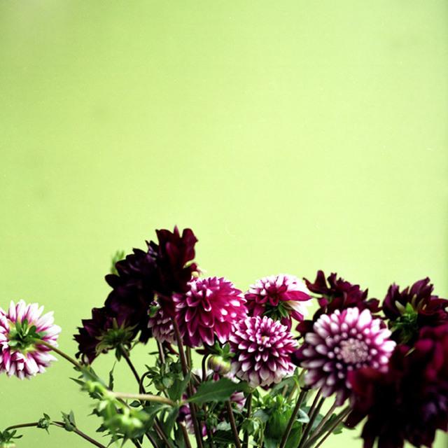John Arsenault, 'Tate, Flowers', 2003, ClampArt