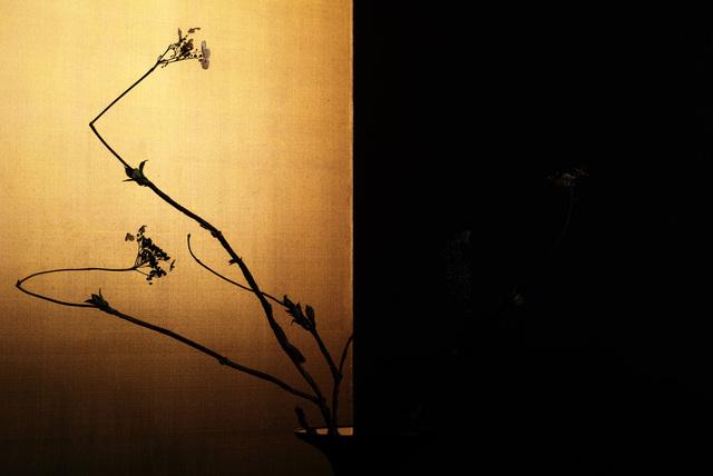 , 'hydrangea 14,' 2017, Galerie Marie-Robin