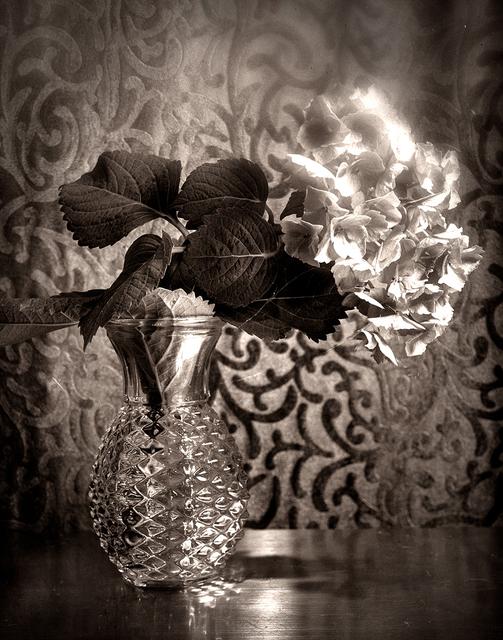 Leslie Hanes, 'Hydrangea with Cut Glass Vase ', 2020, Photography, Silver gelatin print, hand toned, Soho Photo Gallery