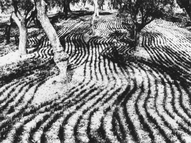 , 'Paesaggio,' 1970, Robert Klein Gallery