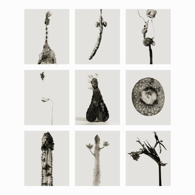 , 'Herbarium (9 images),' 1984, Galleria del Cembalo
