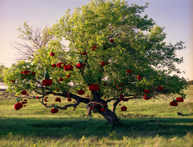 , 'Apples on Tree,' 2009, dc3 Art Projects