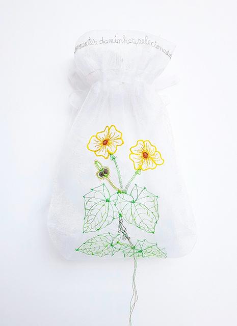 , 'Thumbergia alata homo (da série: Minha coleção de sementes Daninhas, 2006/2016),' 2016, Luciana Caravello Arte Contemporânea