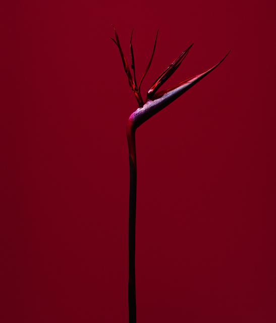 , 'fig. XIII,' 2017, Galerie SOON