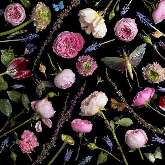 , 'Botanical VI, Juliet Roses,' 2013, Snite Museum of Art