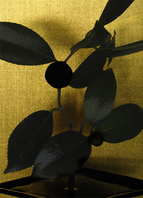 , 'camellia,' 2017, Galerie Marie-Robin