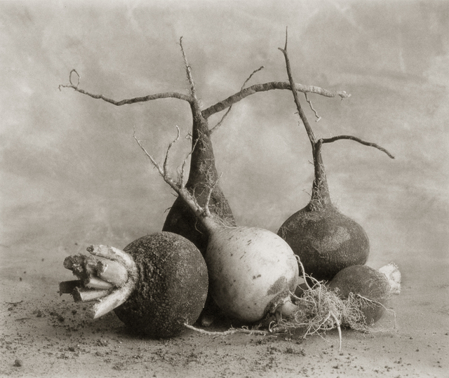 , 'Black Radishes and One White One,' , Gallery 270