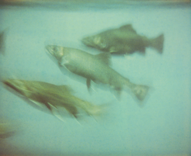 Stefanie Schneider, 'Fish (Stay)', 2006, Photography, Digital C-Print based on a Polaroid, not mounted, Instantdreams