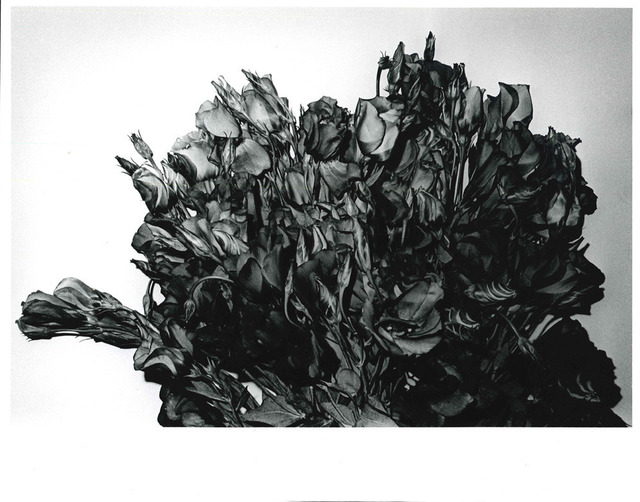 , 'Turkish Bellflower, Shibuya-ku, Tokyo,' 1990, Taka Ishii Gallery