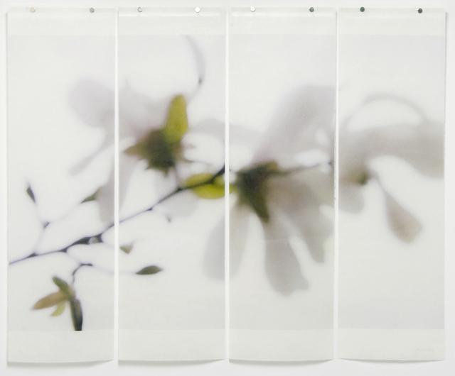 Jeri Eisenberg, 'Star Magnolia No. 3', 2012, Kathryn Markel Fine Arts