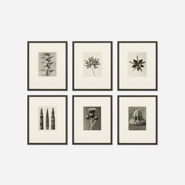 Six Works from Wundergarten Der Natur