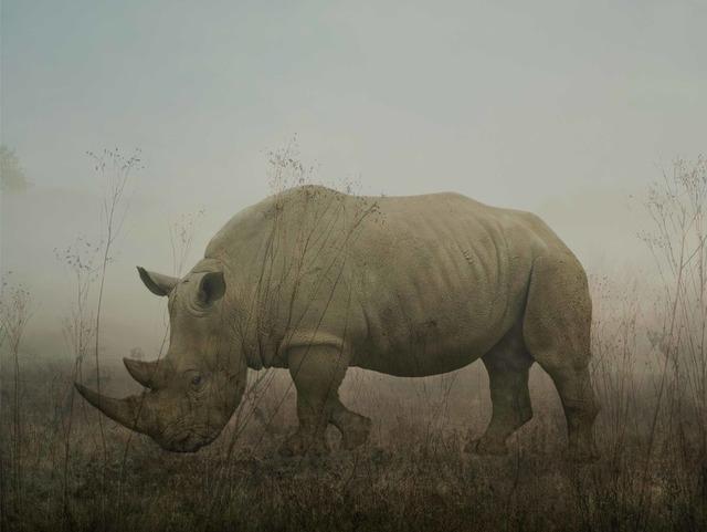 , 'Monty, rhino,' 2016, ILEX Gallery
