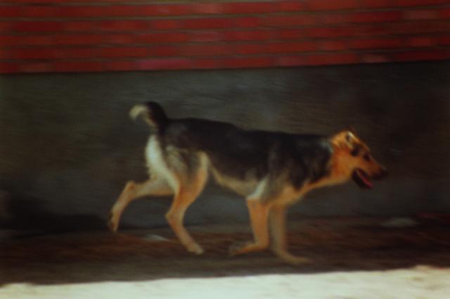 , 'Winterarbeiten: Toba,' 2000, Corkin Gallery