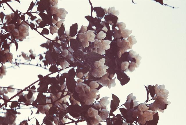 , 'Fleur de printemps 1,' , The Print Atelier