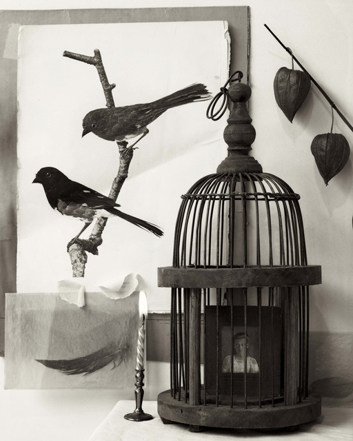 Zoë Zimmerman, 'Two Birds and Cage', photo-eye Gallery