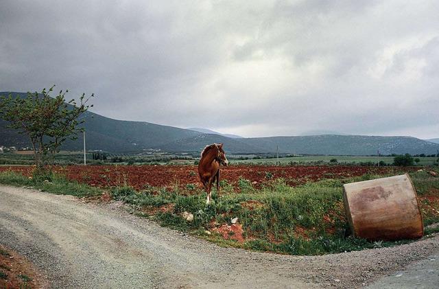 , 'Viotia (horse),' 2001, Dio Horia