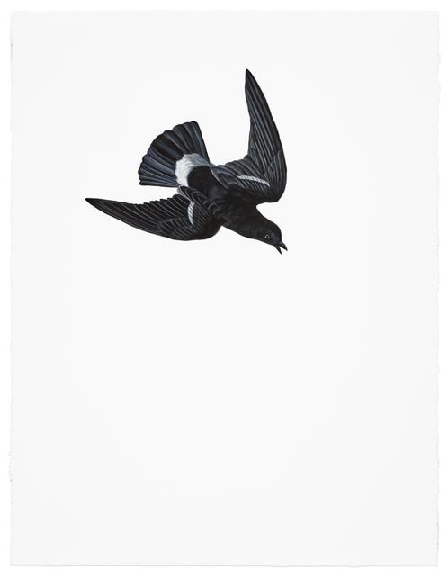 Shelley Reed, 'Wilson's Petrel', 2017, Sears-Peyton Gallery