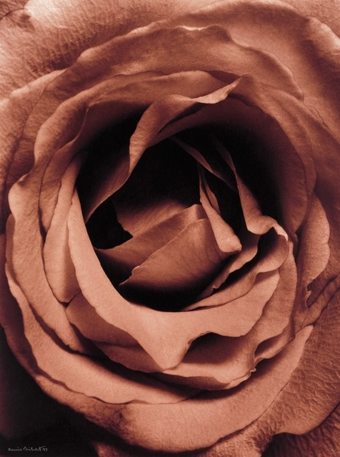 , 'Rose,' 1994, Nailya Alexander Gallery