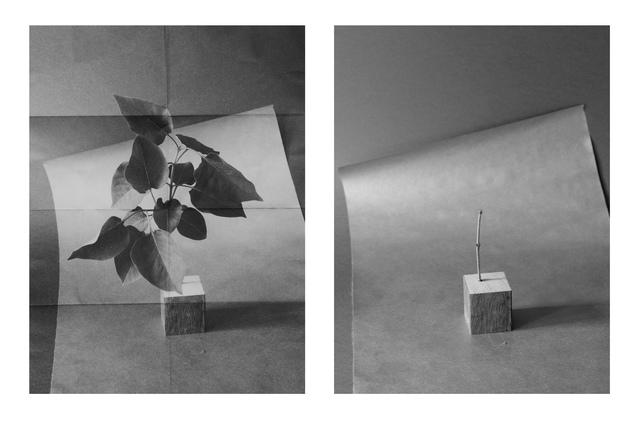 , 'A bit of Branch (Passage Through Various Materials),' 2015, Rotwand