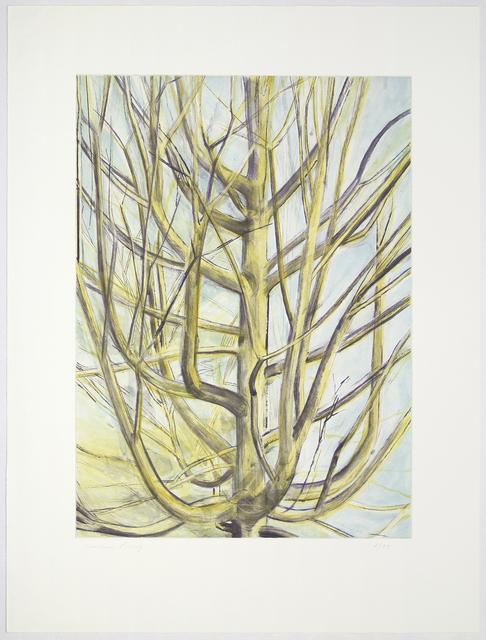 , 'Maple Tree,' 1997, Senior & Shopmaker Gallery