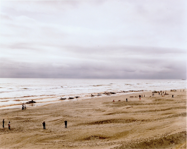 , 'APPROXIMATELY 17 OF 41 WHALES WHICH BEACHED (AND SUBSEQUENTLY DIED), FLORENCE, OREGON, JUNE 1979,' 1979, Huxley-Parlour