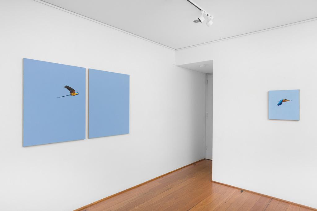 Install shot: Matthew Kentmann | Blue & Gold Photo: Docqment