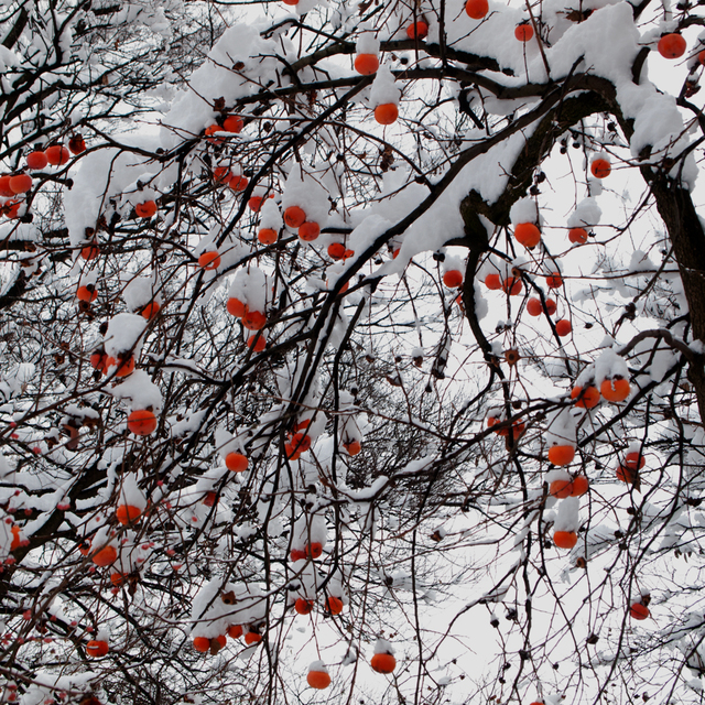, 'TDTDC 25 (Persimmons),' 2009, photo-eye Gallery