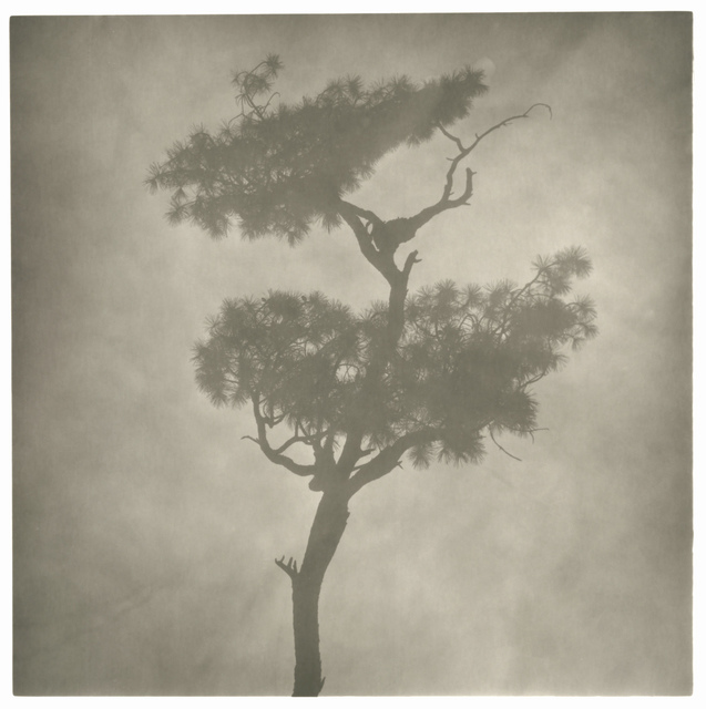 , 'Fog Branch No.2,' 2008, see+ Gallery