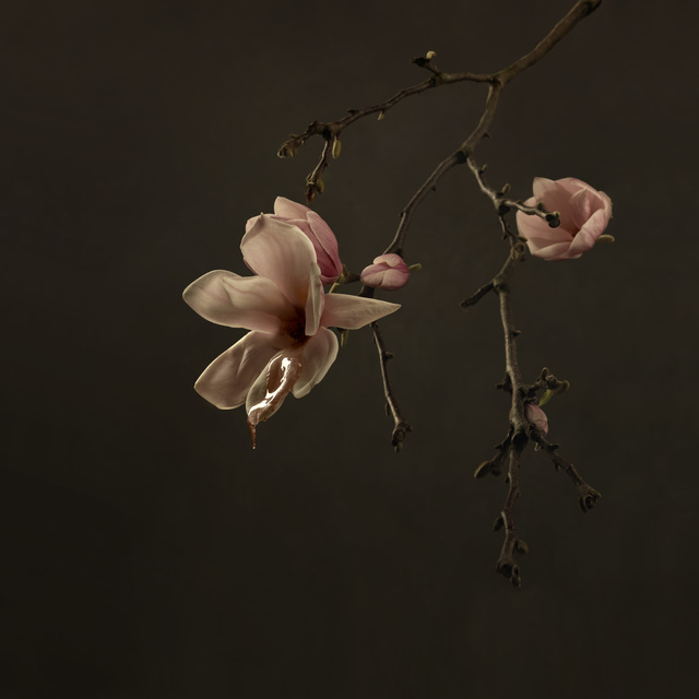 , 'Magnolia,' 2018, SmithDavidson Gallery