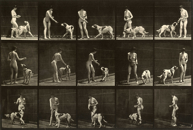 , 'Plate 514. Feeding a dog,' 1887, Laurence Miller Gallery