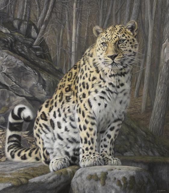 , 'Sitting Amur Leopard,' , Jonathan Cooper
