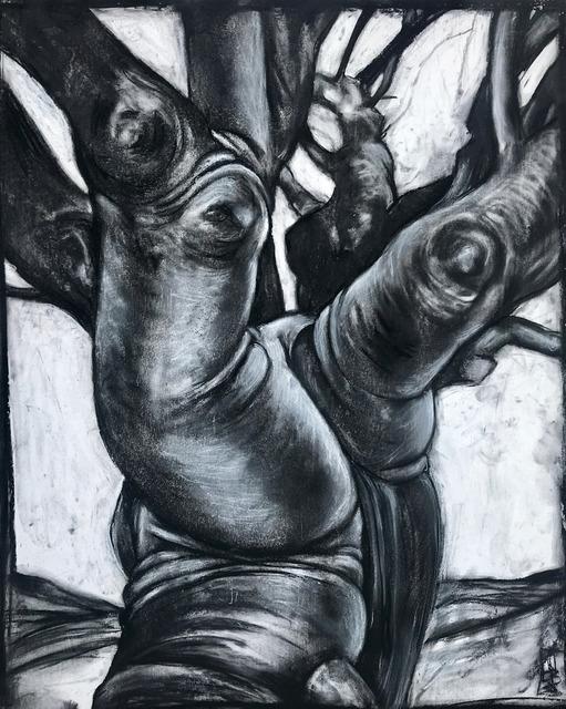 , 'Ceiba Tree, Vieques,' 2019, Rice Polak Gallery