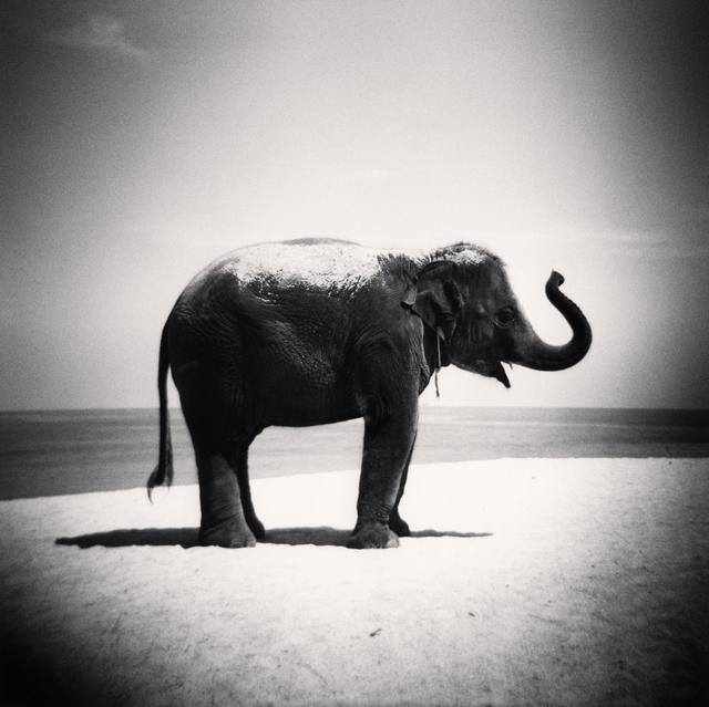 , 'Baby elephant, Phuket,' 2011, Vision Neil Folberg Gallery