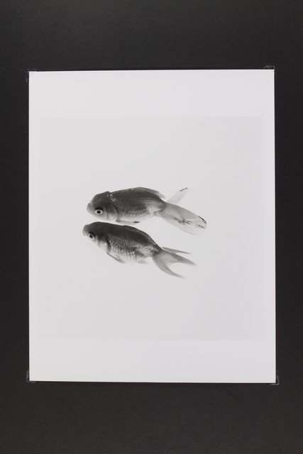 , 'Gold Fish,' , Gallery LVS