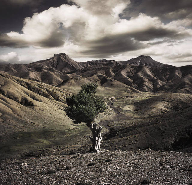 Bernhard Quade, 'Mocorro Atlas Tree', 2008, Photography, Chromogenic Print, CHROMA GALLERY